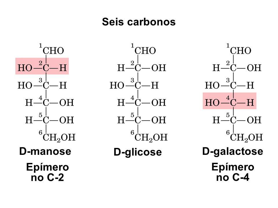 Seis carbonos D-manose D-glicose D-galactose Epímero no C-2 Epímero no C-4