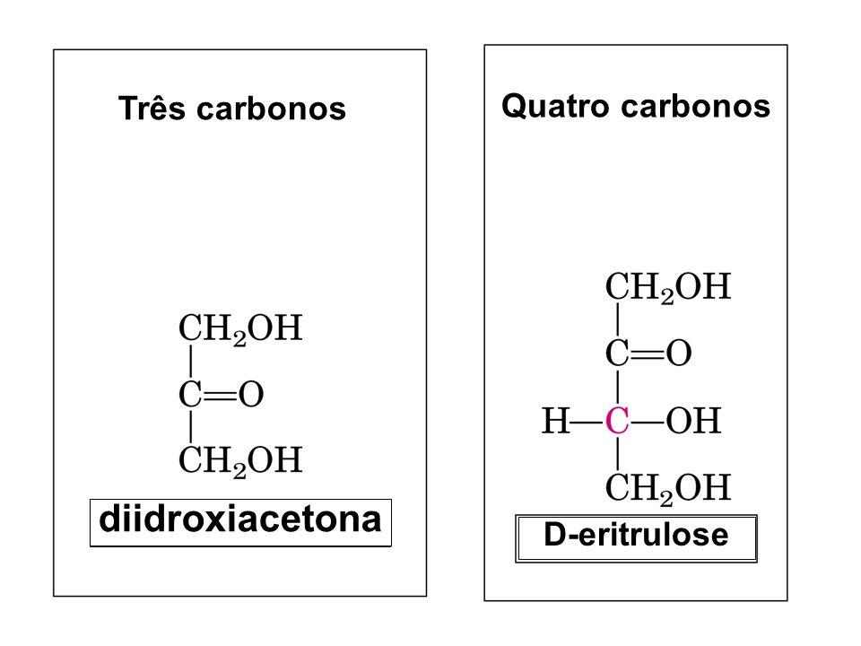 Três carbonos Quatro carbonos diidroxiacetona D-eritrulose