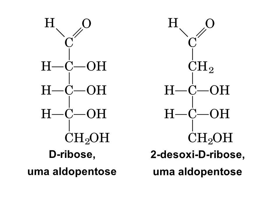 D-ribose, uma aldopentose 2-desoxi-D-ribose, uma aldopentose