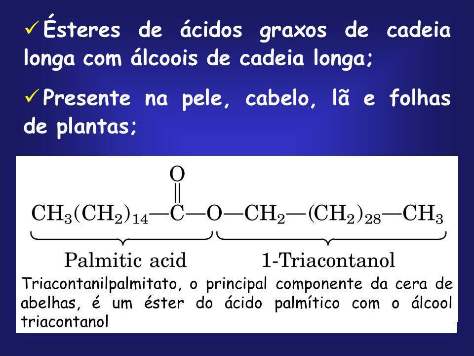 Ésteres de ácidos graxos de cadeia longa com álcoois de cadeia longa;