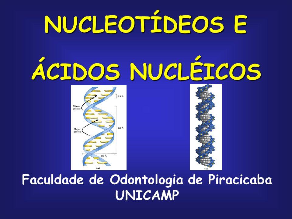 NUCLEOTÍDEOS E ÁCIDOS NUCLÉICOS