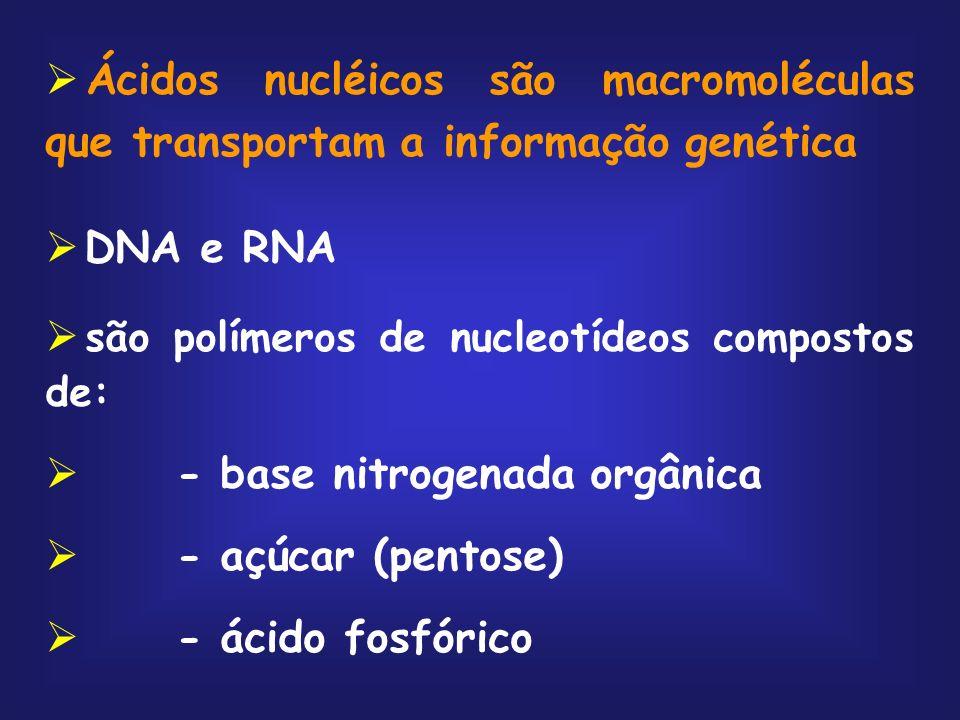 Ácidos nucléicos são macromoléculas que transportam a informação genética