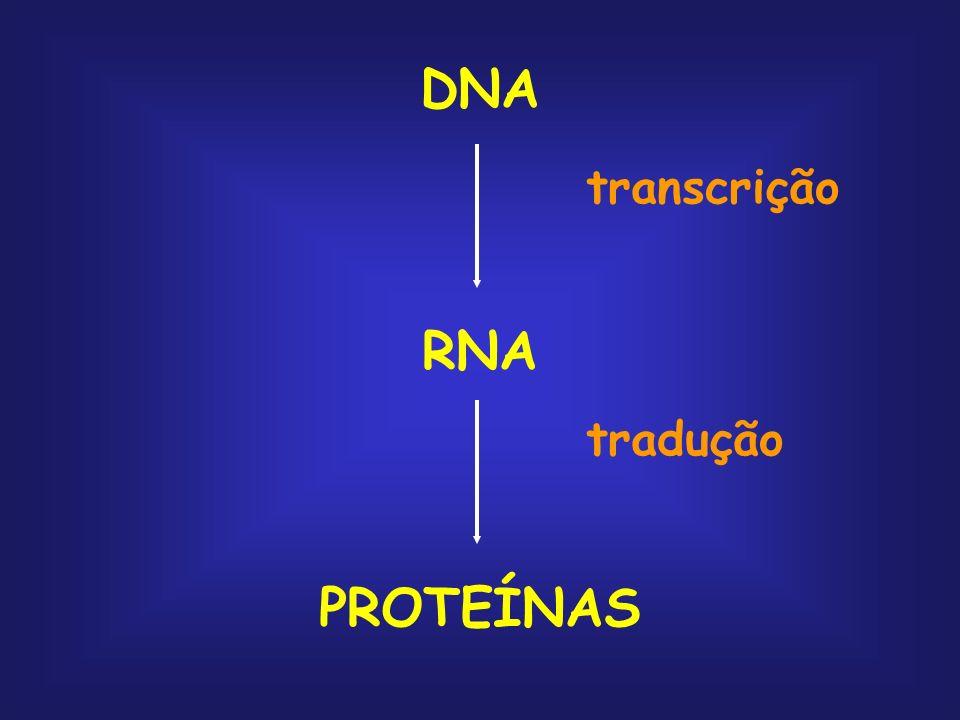 DNA transcrição RNA tradução PROTEÍNAS