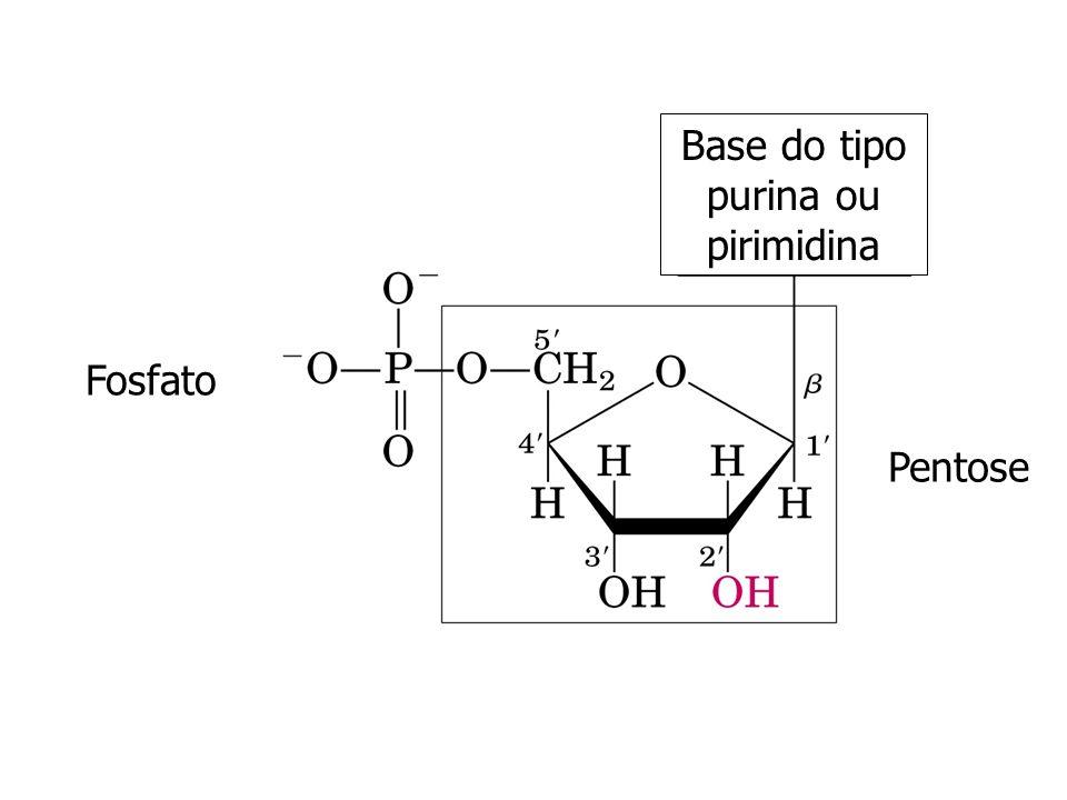 Base do tipo purina ou pirimidina
