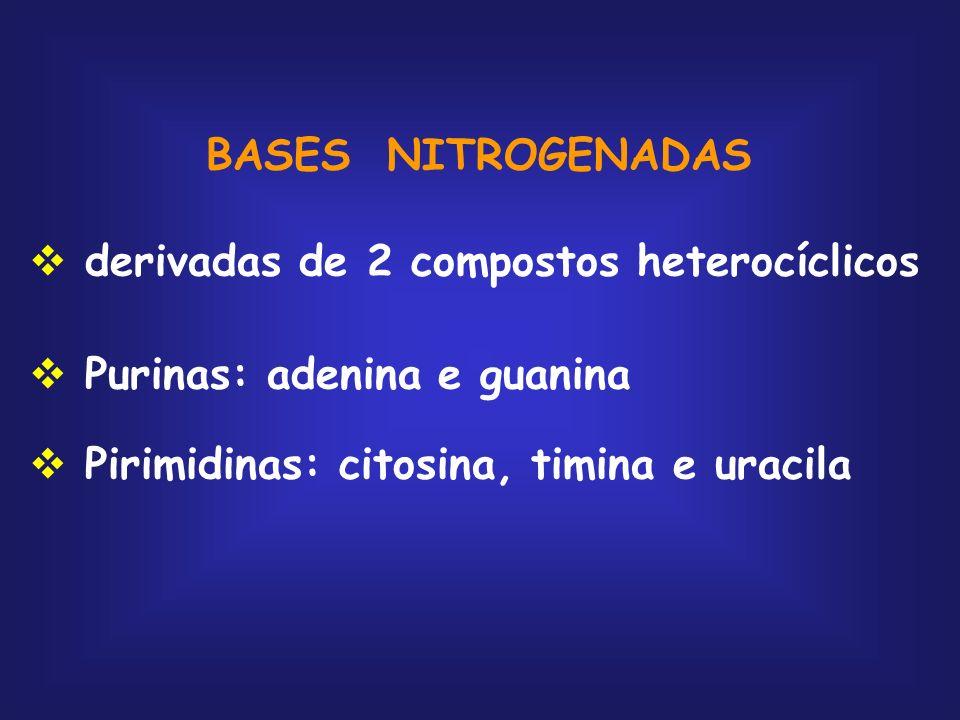BASES NITROGENADASderivadas de 2 compostos heterocíclicos.