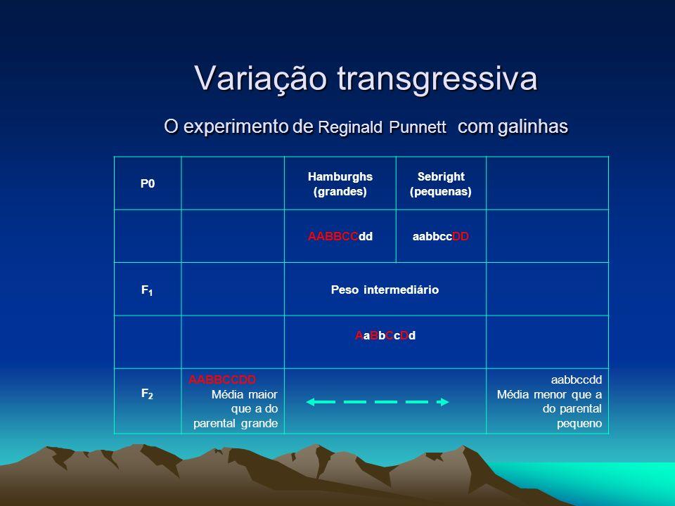 Variação transgressiva O experimento de Reginald Punnett com galinhas