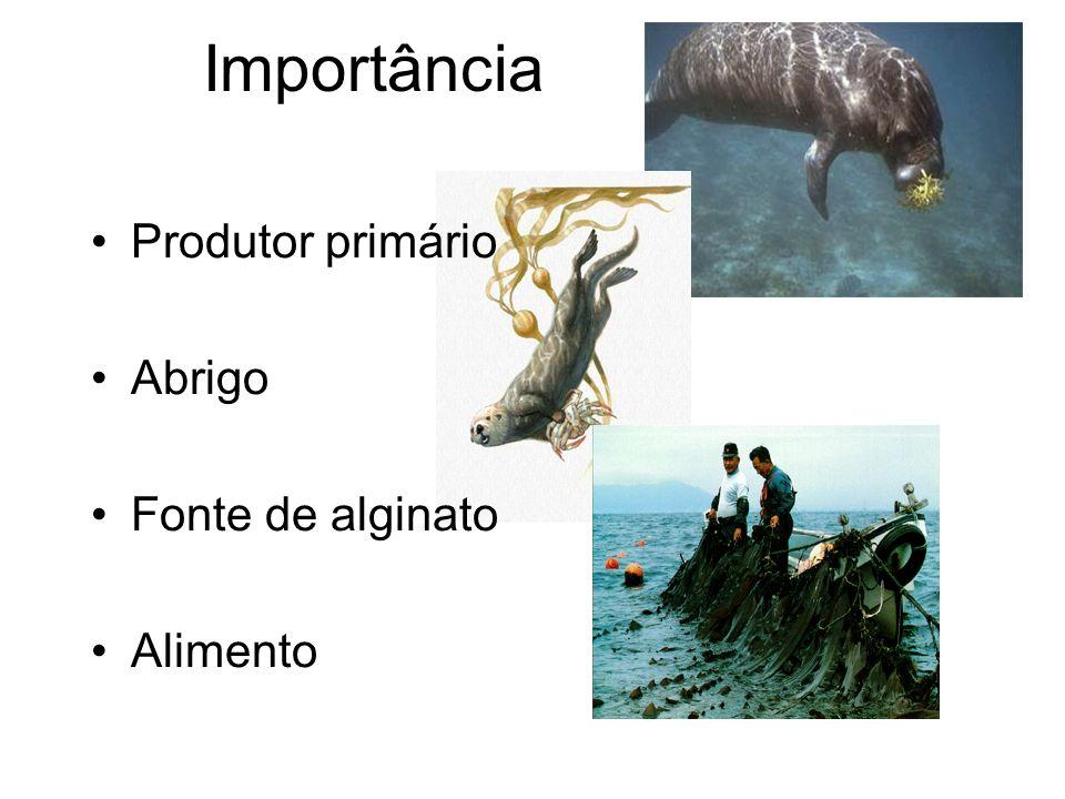 Importância Produtor primário Abrigo Fonte de alginato Alimento