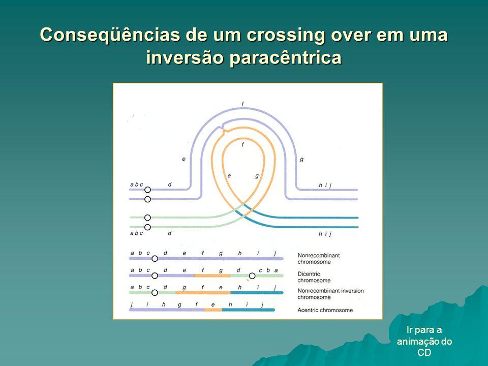 Conseqüências de um crossing over em uma inversão paracêntrica