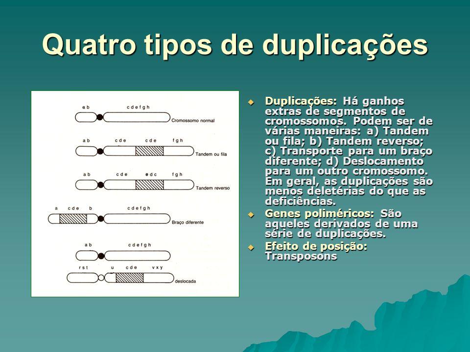 Quatro tipos de duplicações
