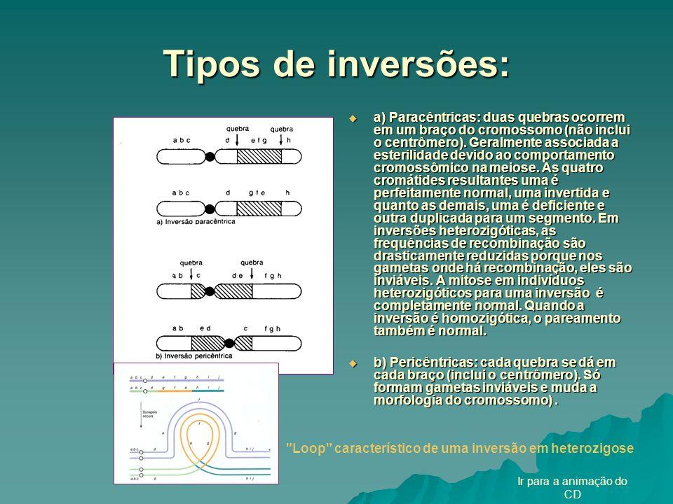 Loop característico de uma inversão em heterozigose