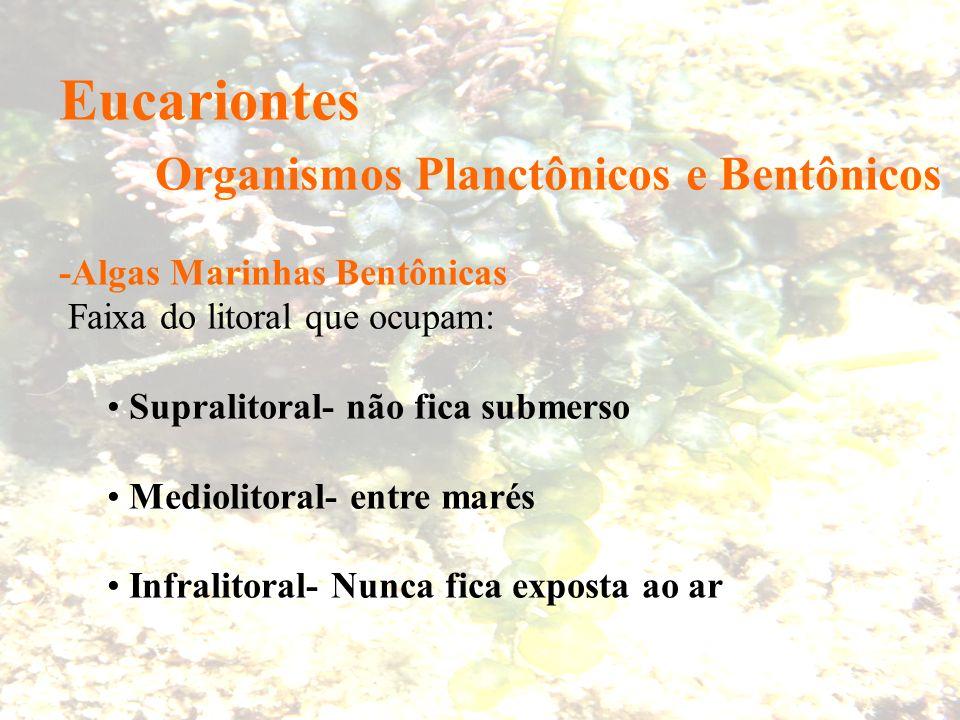 Organismos Planctônicos e Bentônicos