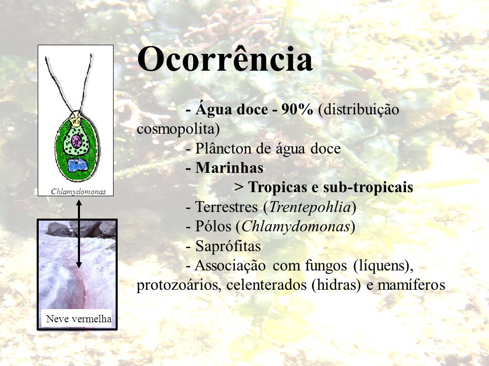Ocorrência - Água doce - 90% (distribuição cosmopolita)