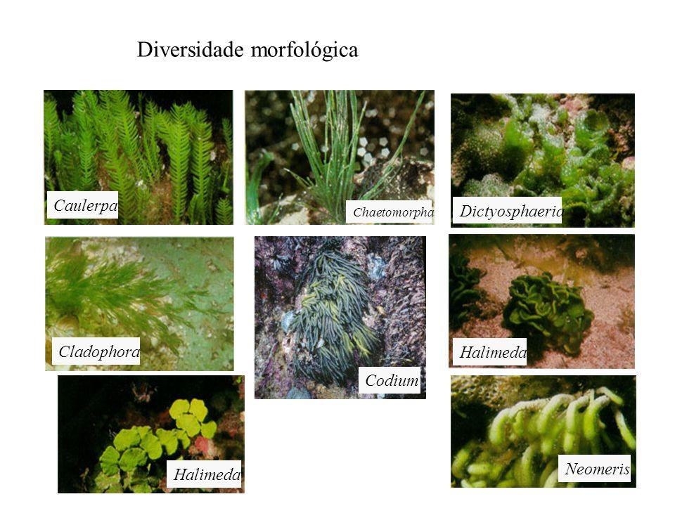 Diversidade morfológica