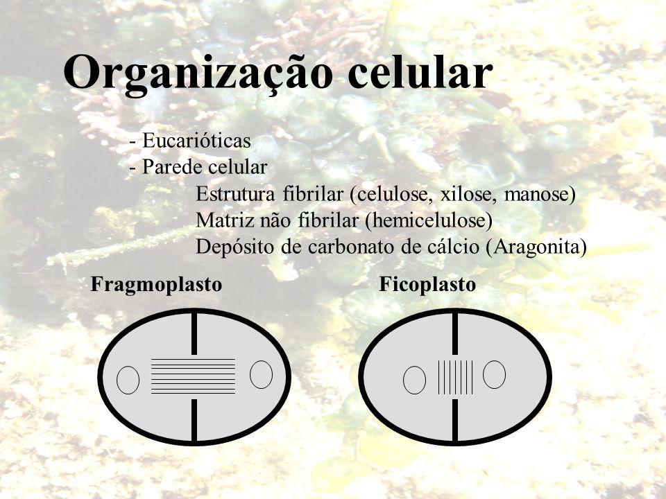 Organização celular - Eucarióticas - Parede celular