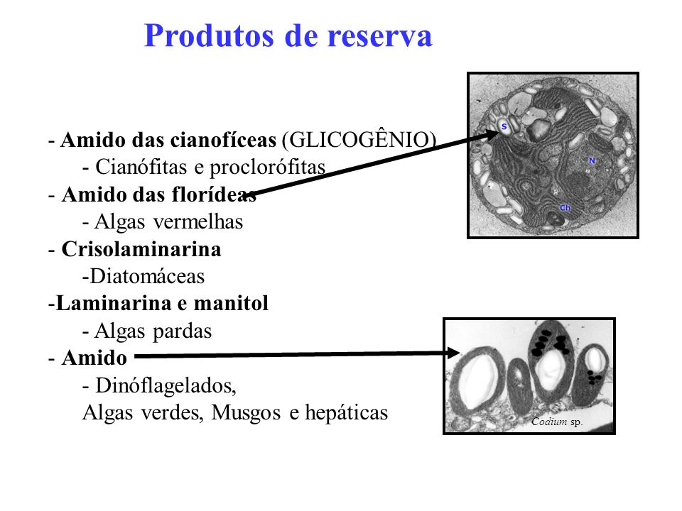 Produtos de reserva Amido das cianofíceas (GLICOGÊNIO)
