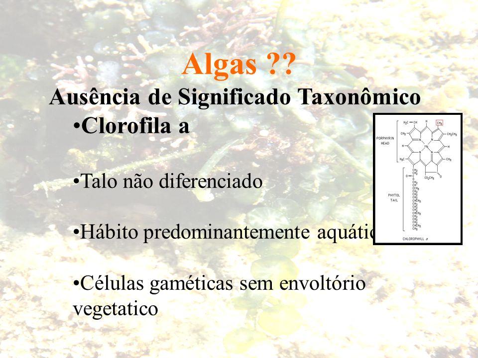 Algas Ausência de Significado Taxonômico Clorofila a