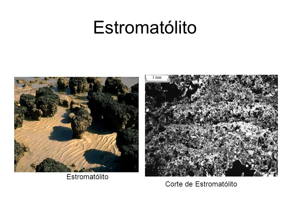 Corte de Estromatólito