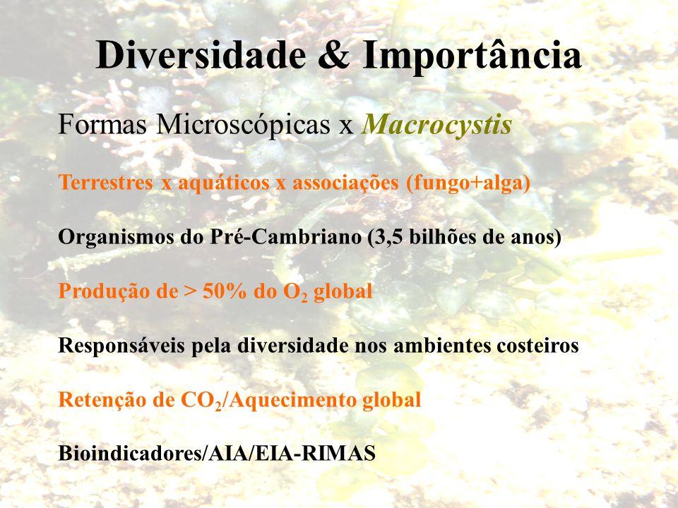 Diversidade & Importância