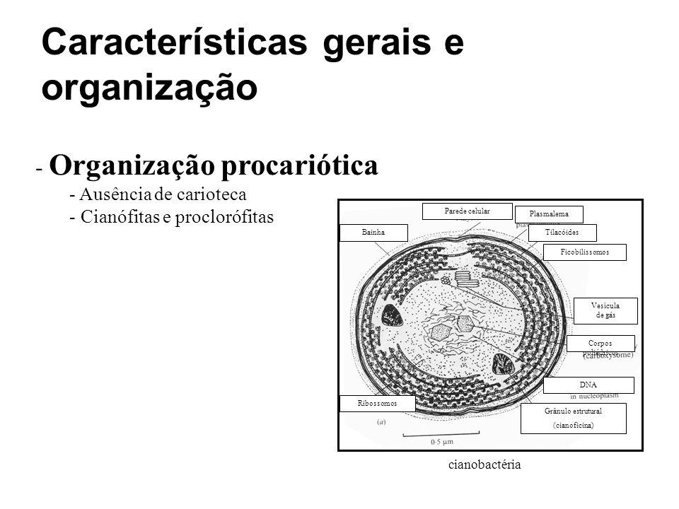 Características gerais e organização