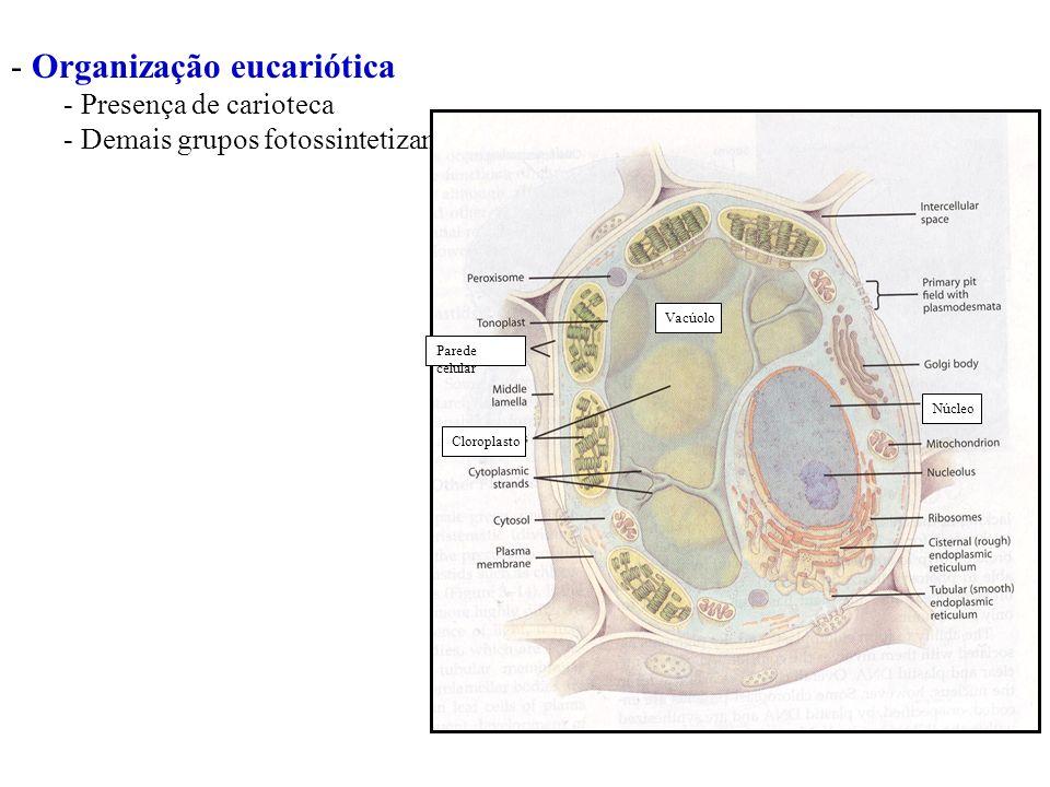 Organização eucariótica