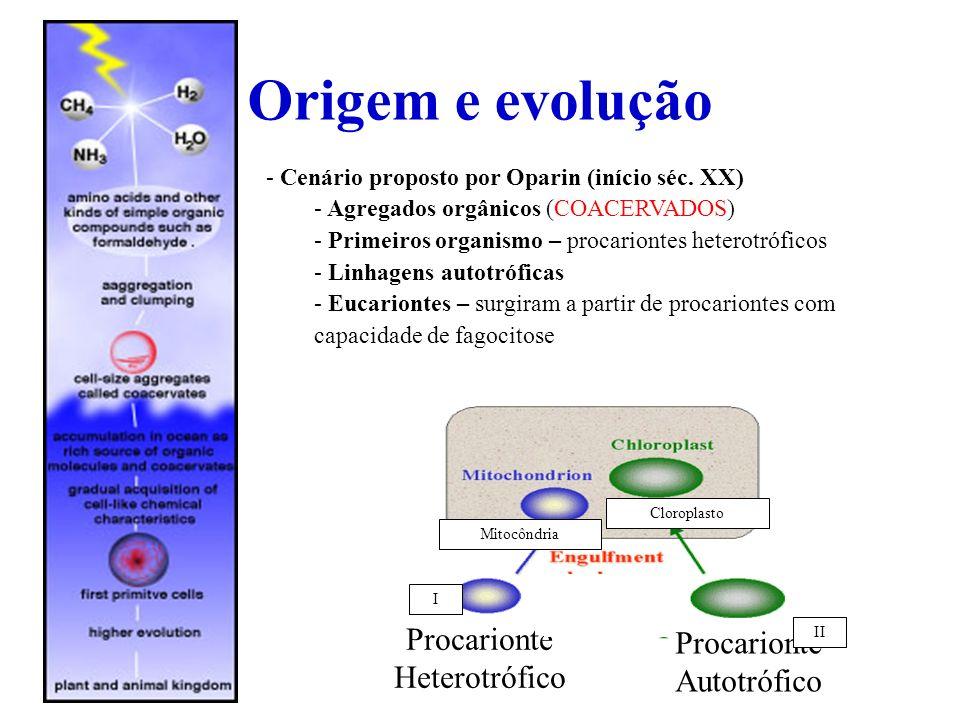 Origem e evolução Procarionte Procarionte Heterotrófico Autotrófico