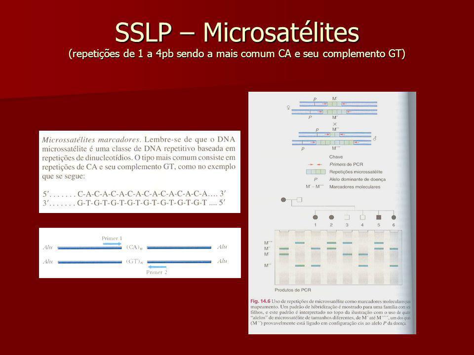 SSLP – Microsatélites (repetições de 1 a 4pb sendo a mais comum CA e seu complemento GT)