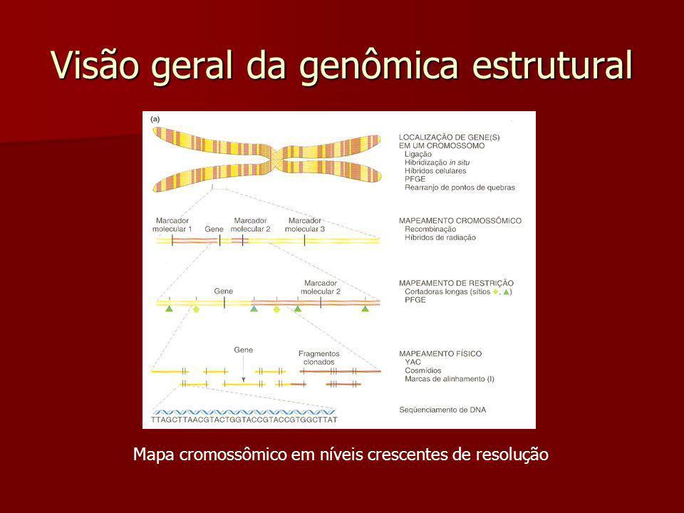 Visão geral da genômica estrutural