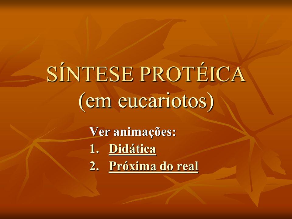 SÍNTESE PROTÉICA (em eucariotos)