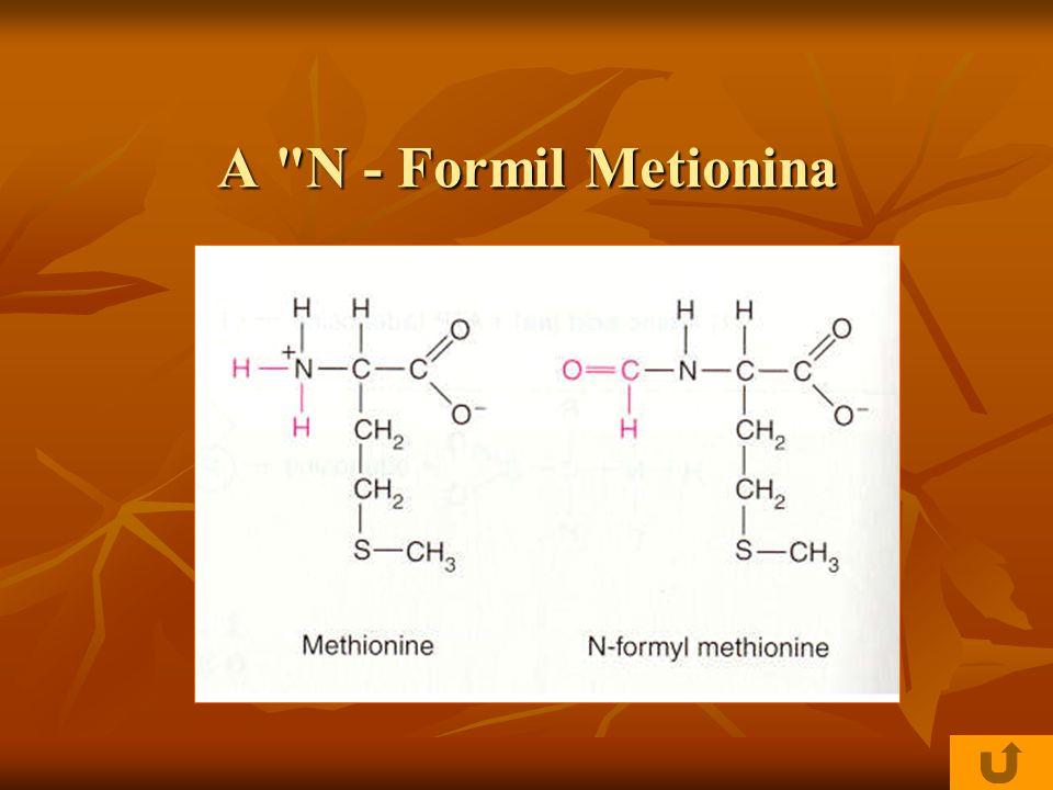 A N - Formil Metionina