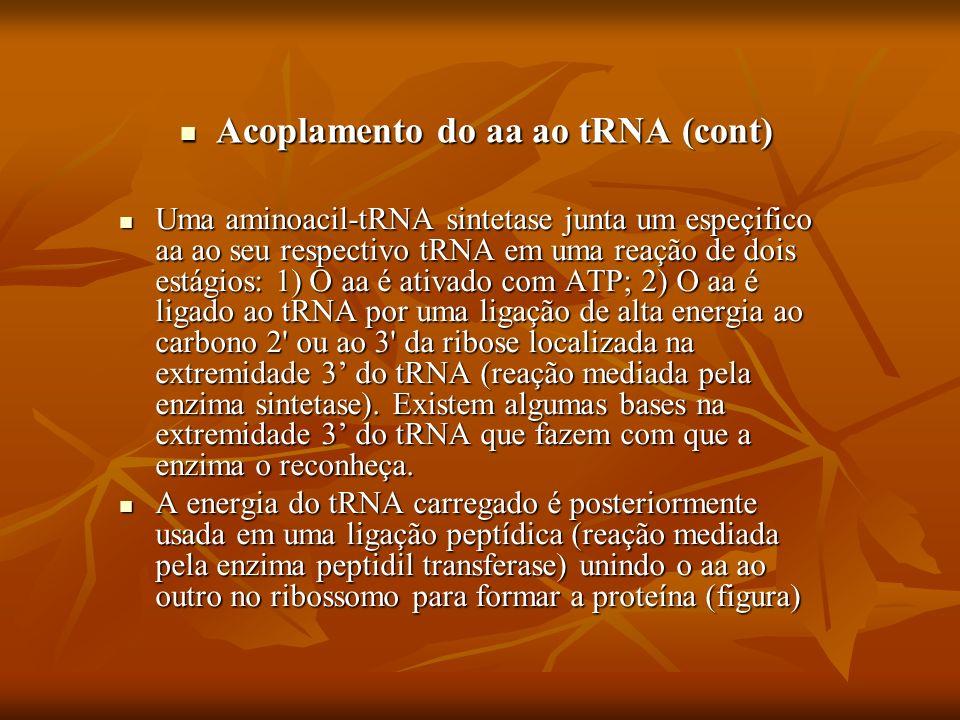 Acoplamento do aa ao tRNA (cont)