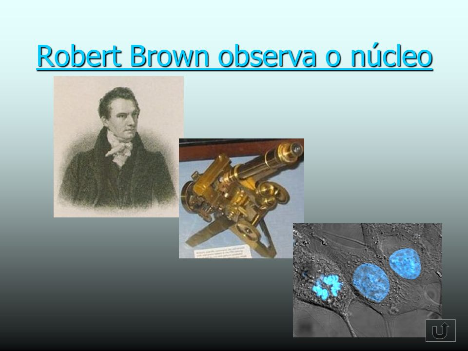 Robert Brown observa o núcleo