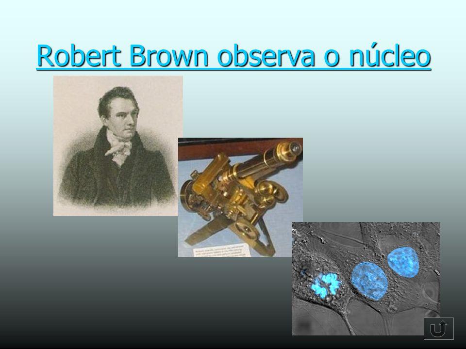 Robert Brown observa o núcleo