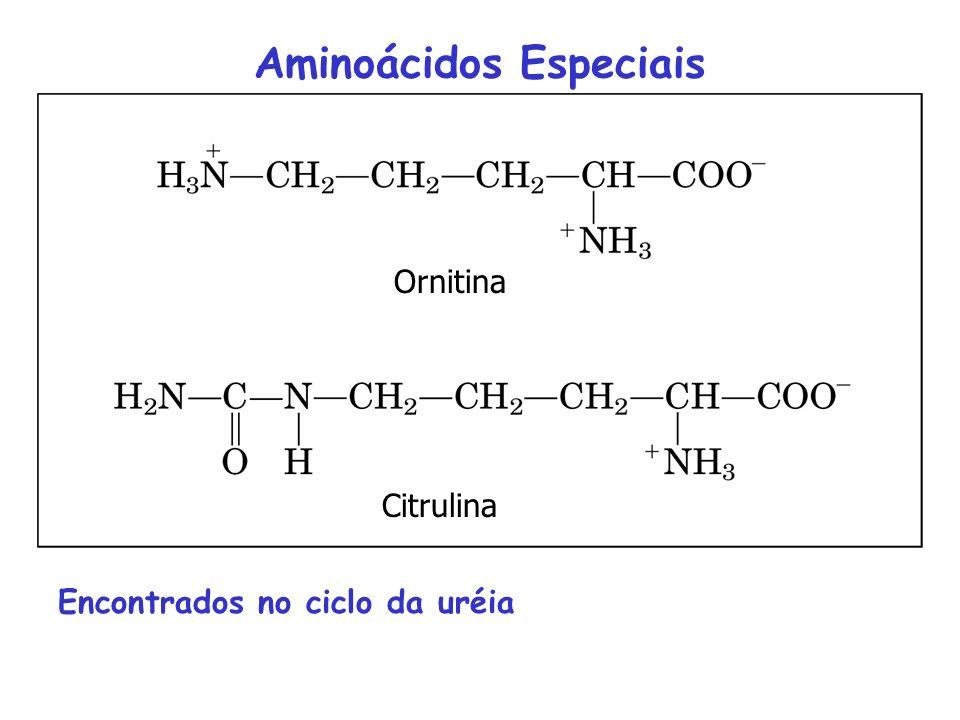 Aminoácidos Especiais