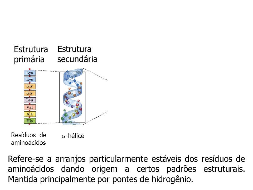 Estrutura primária Estrutura secundária