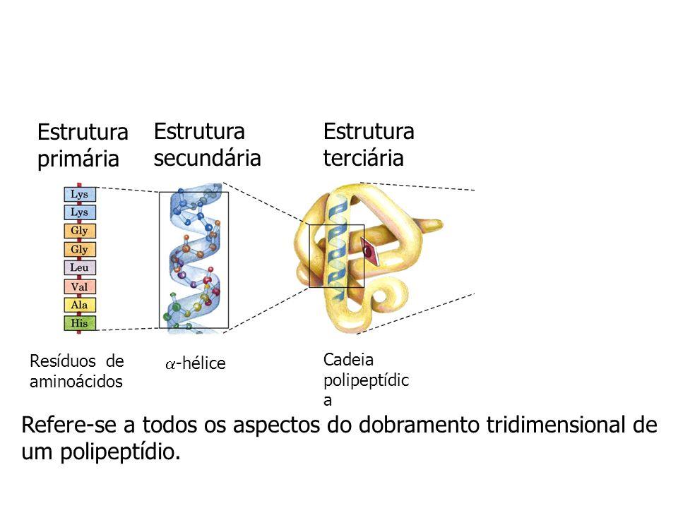Estrutura primária Estrutura secundária Estrutura terciária