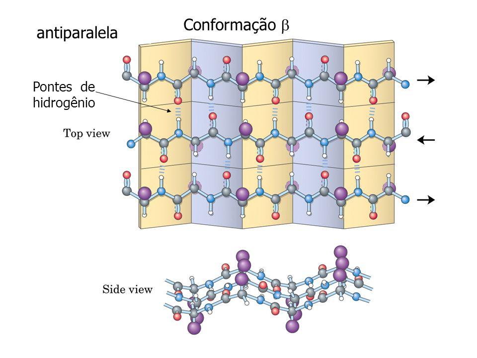 Conformação  antiparalela Pontes de hidrogênio