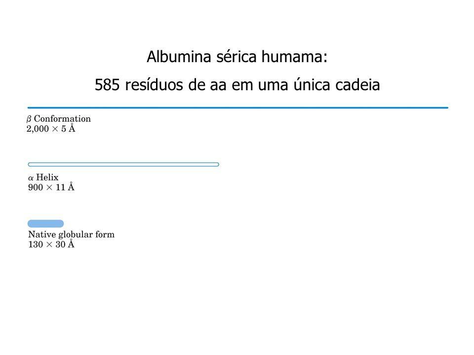 Albumina sérica humama: 585 resíduos de aa em uma única cadeia