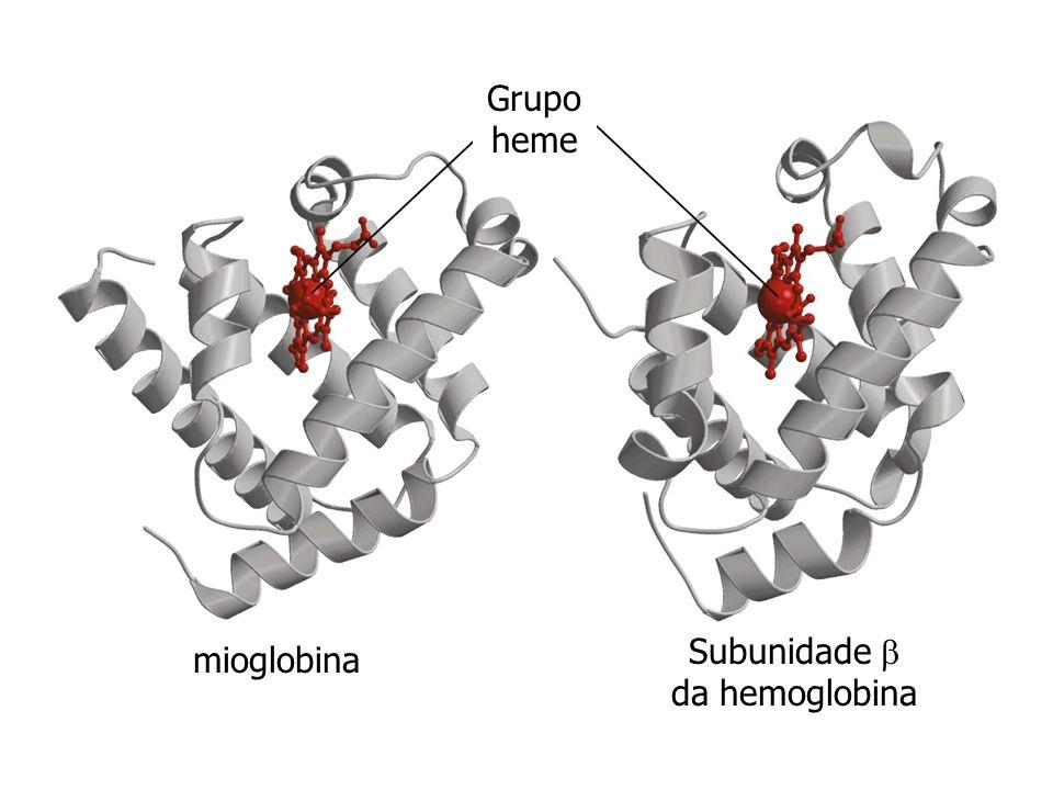 Subunidade  da hemoglobina