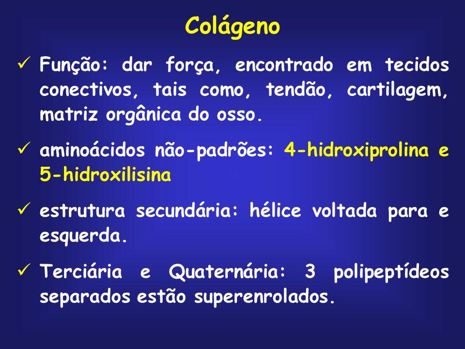 Colágeno Função: dar força, encontrado em tecidos conectivos, tais como, tendão, cartilagem, matriz orgânica do osso.