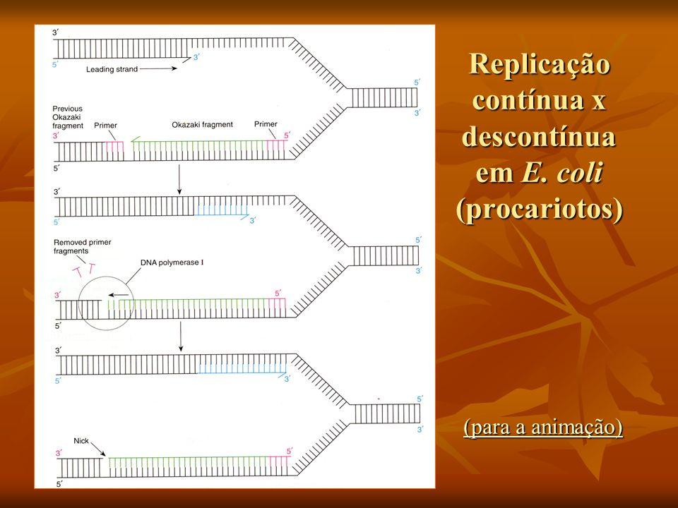 Replicação contínua x descontínua em E. coli (procariotos)