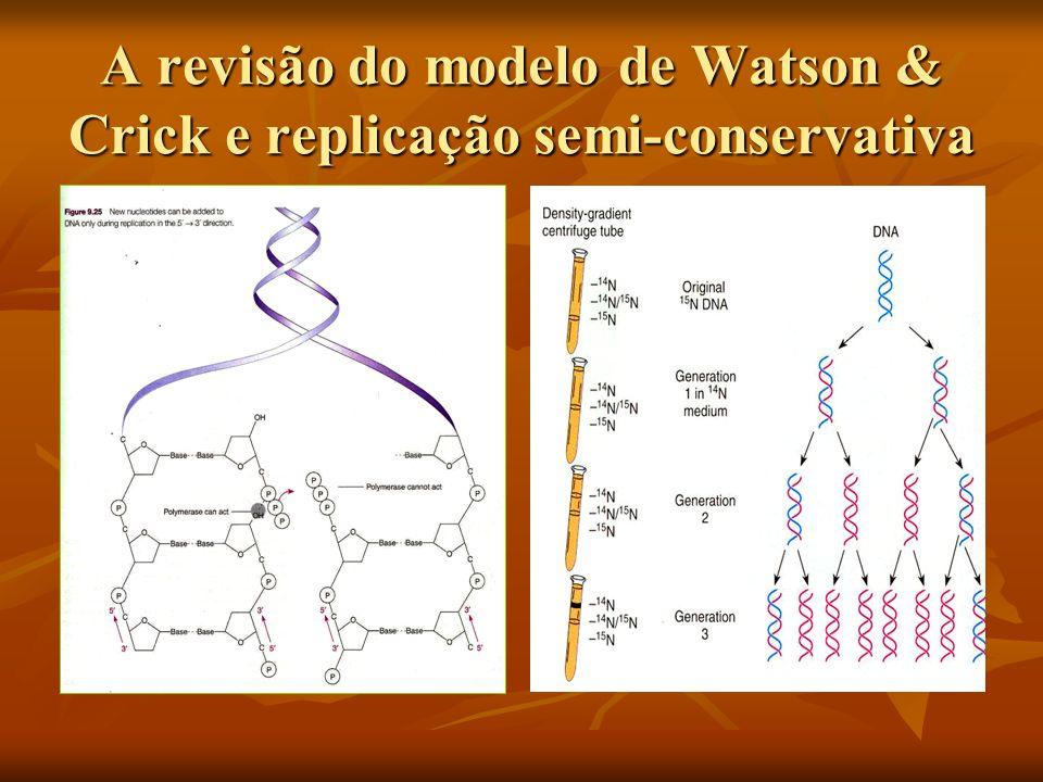 A revisão do modelo de Watson & Crick e replicação semi-conservativa