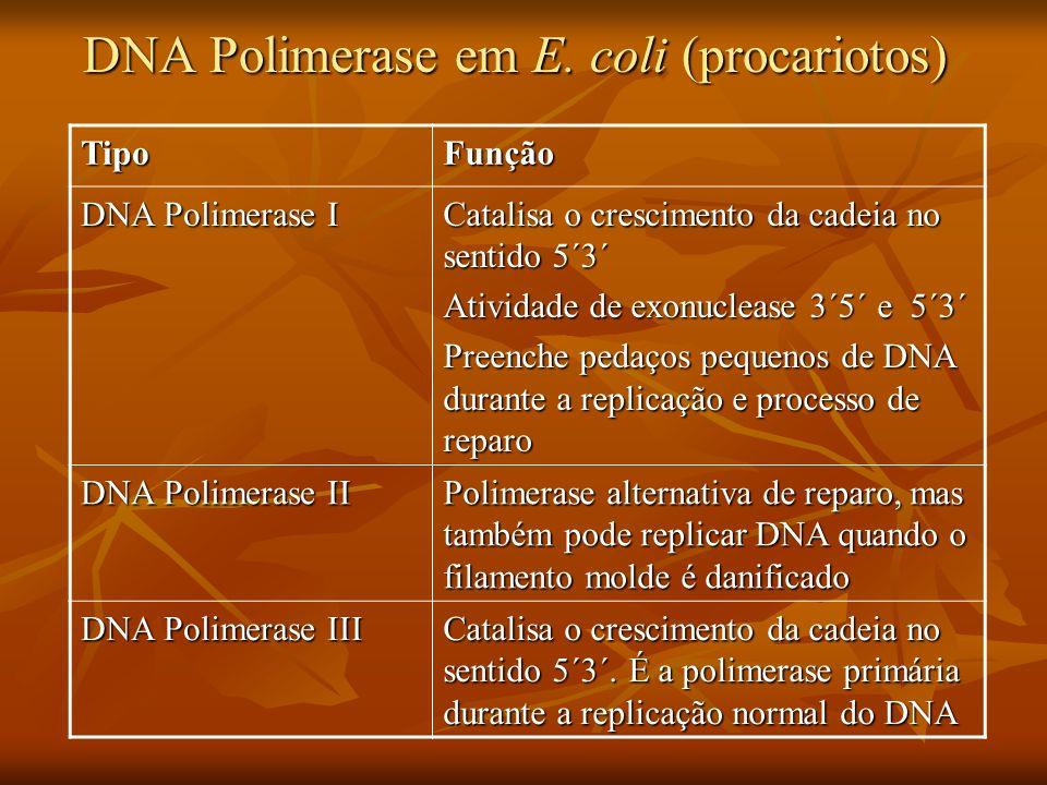 DNA Polimerase em E. coli (procariotos)