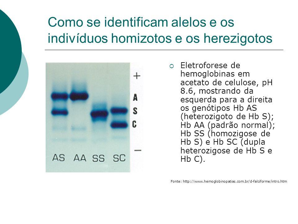 Como se identificam alelos e os indivíduos homizotos e os herezigotos