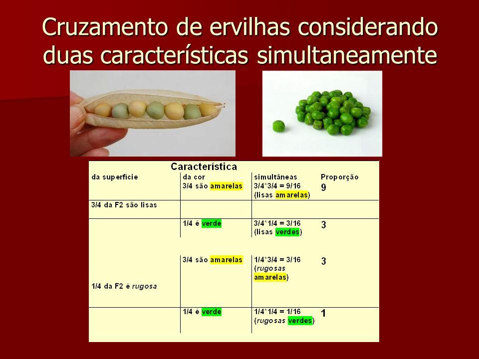 Cruzamento de ervilhas considerando duas características simultaneamente