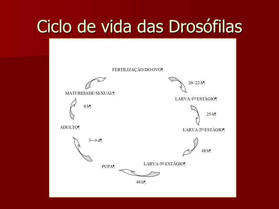 Ciclo de vida das Drosófilas