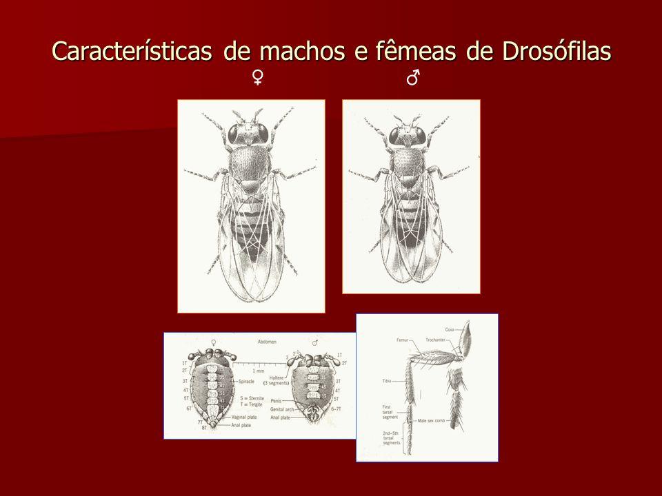 Características de machos e fêmeas de Drosófilas