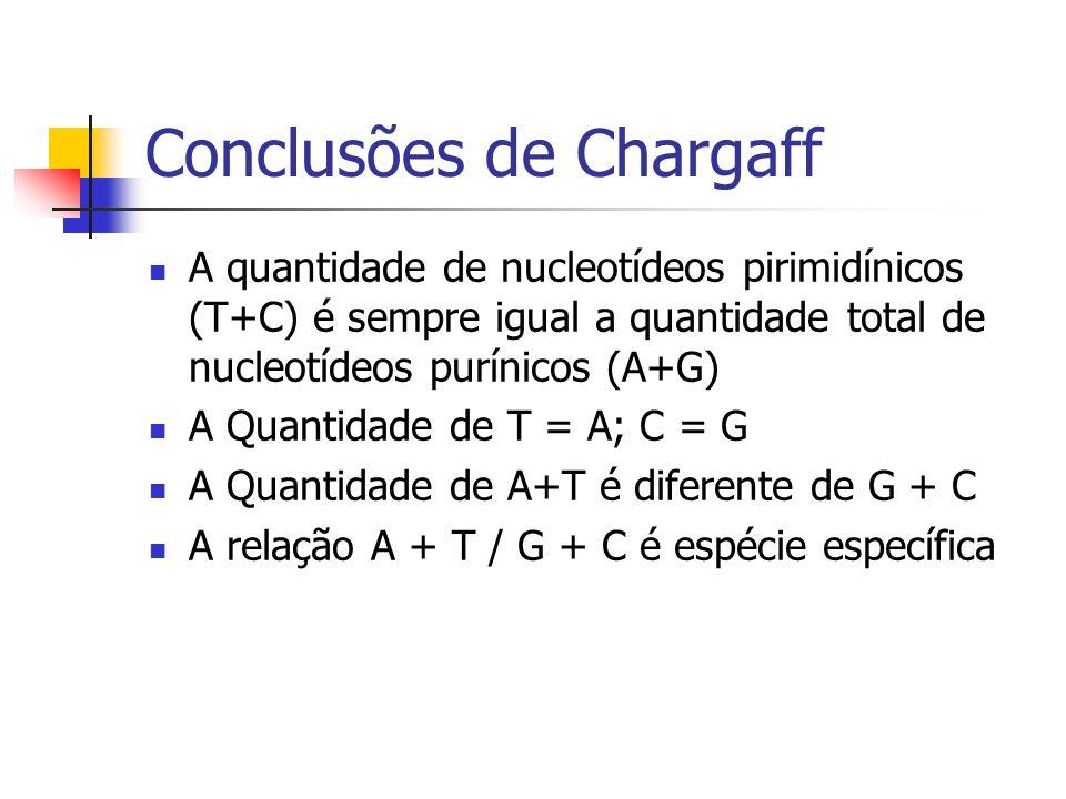 Conclusões de Chargaff