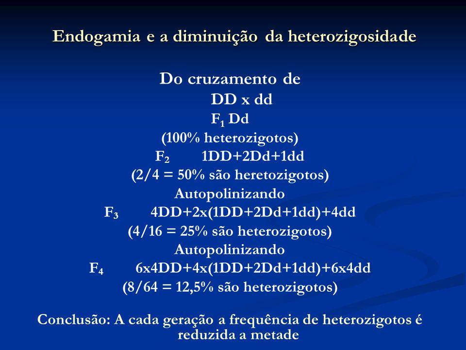 Endogamia e a diminuição da heterozigosidade