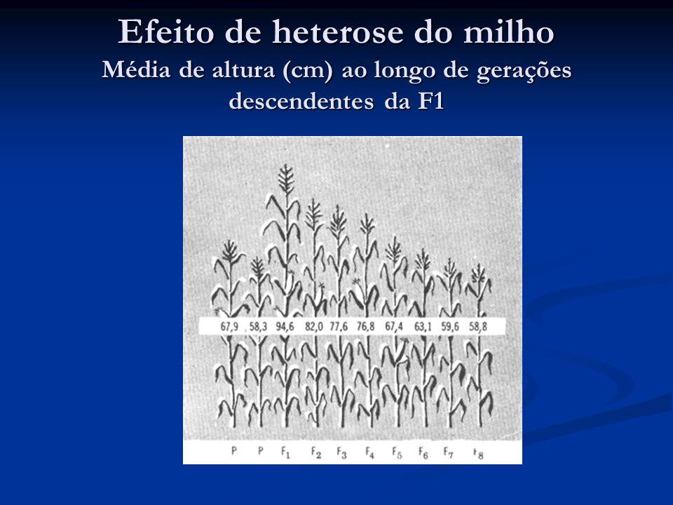 Efeito de heterose do milho Média de altura (cm) ao longo de gerações descendentes da F1