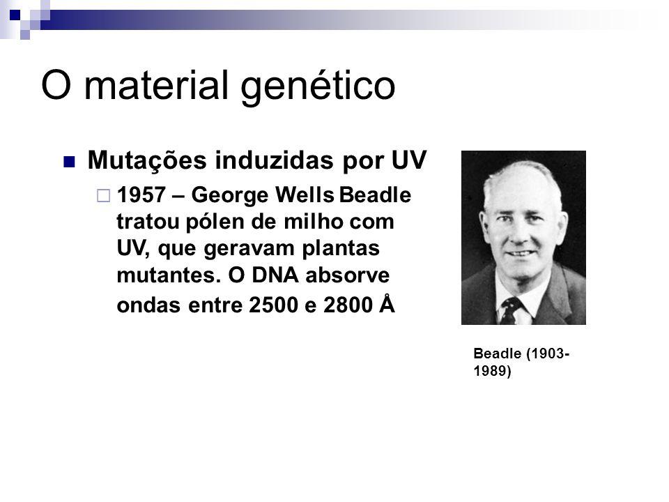 O material genético Mutações induzidas por UV